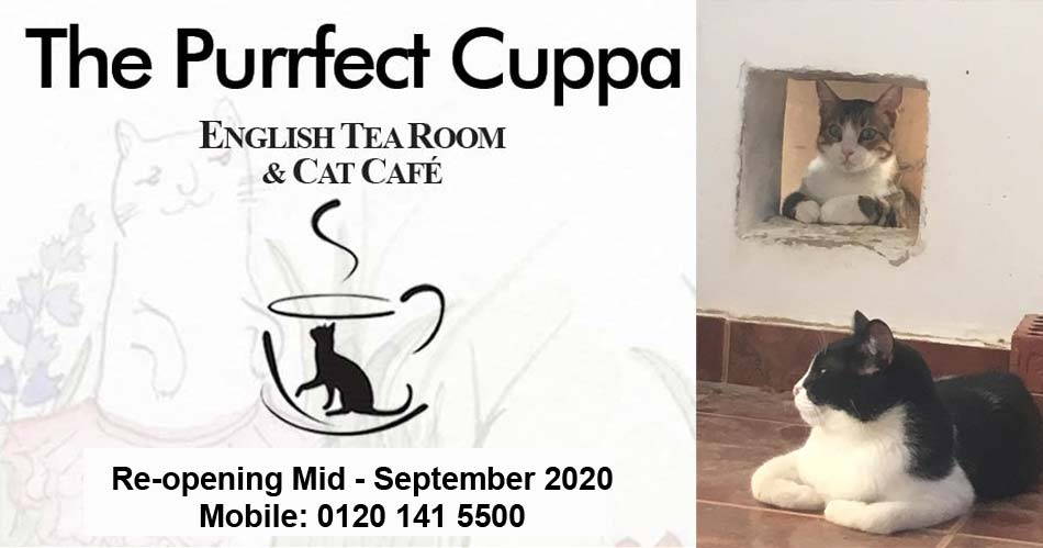 924 Purrfect cuppa 950
